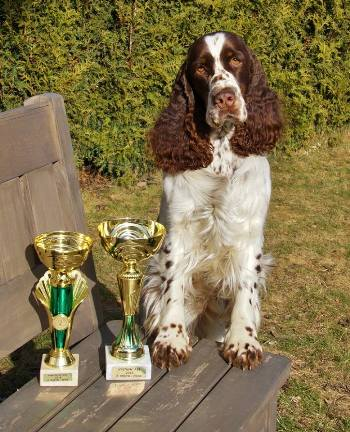 TOP DOG 2017 MAR